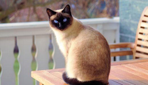 「整体で猫背が治った」はありえない!整体師が答えるホントのところ。